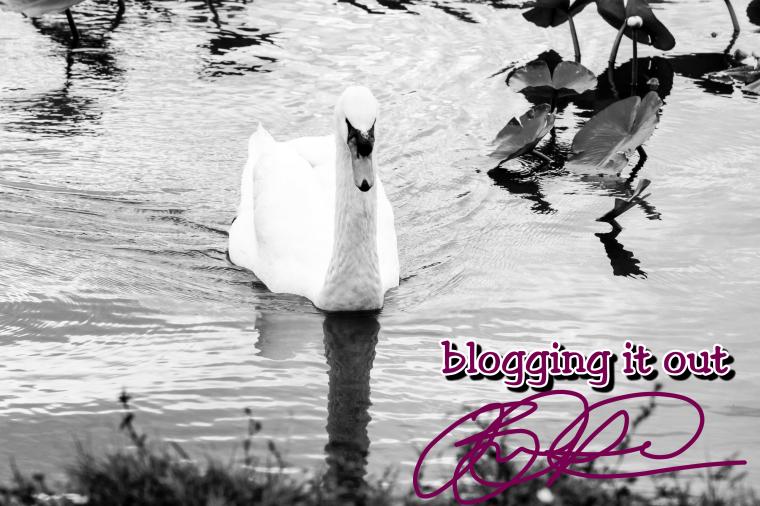blog-swan